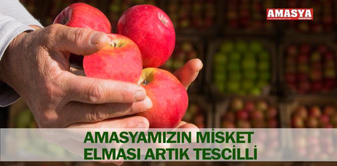 AMASYAMIZIN MİSKET ELMASI ARTIK TESCİLLİ