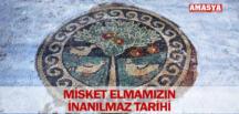 MİSKET ELMAMIZIN İNANILMAZ TARİHİ