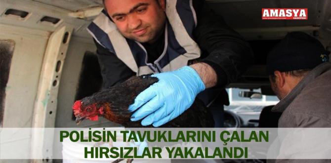 POLİSİN TAVUKLARINI ÇALAN HIRSIZLAR YAKALANDI