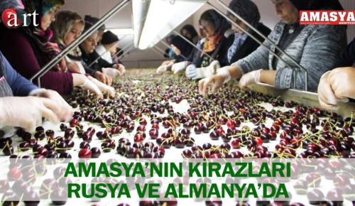 AMASYA'NIN KİRAZLARI RUSYA VE ALMANYA'DA