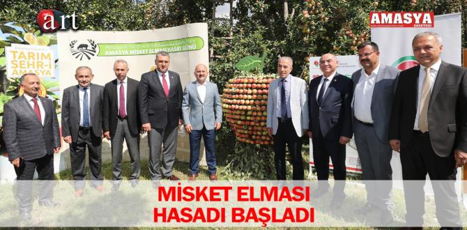 MİSKET ELMASI HASADI BAŞLADI