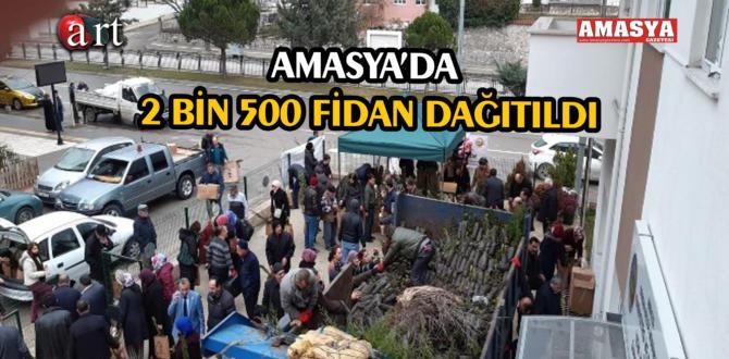 AMASYA'DA 2 BİN 500 FİDAN DAĞITILDI