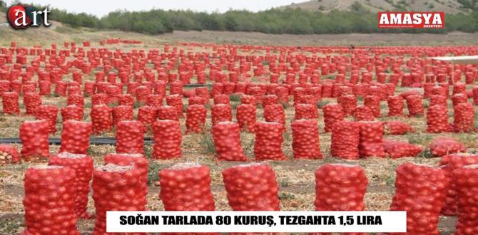 Soğan Tarlada 80 Kuruş, Tezgahta 1,5 lira