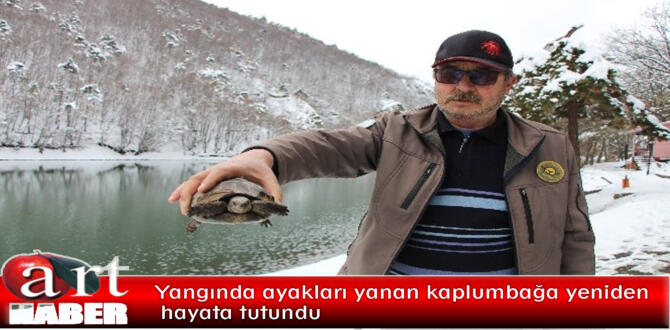 Yangında ayakları yanan kaplumbağa yeniden hayata tutundu