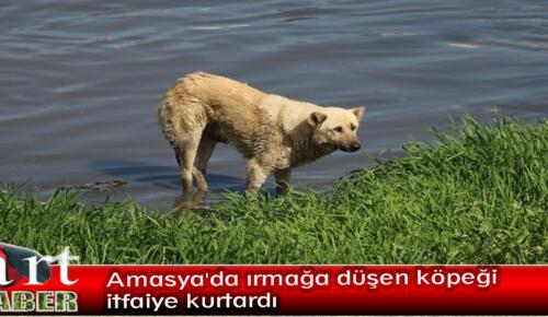 Amasya'da ırmağa düşen köpeği itfaiye kurtardı