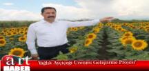 Yağlık Ayçiçeği Üretimi Geliştirme Projesi