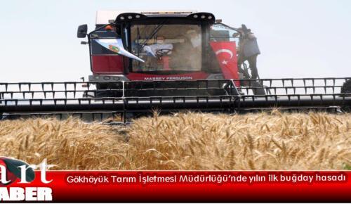 Gökhöyük Tarım İşletmesi Müdürlüğü'nde yılın ilk buğday hasadı