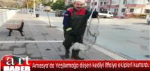 Amasya'da Yeşilırmağa düşen kediyi İtfaiye ekipleri kurtardı.